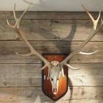 Ein paar Ratschläge für jeden, der einem Jäger werden will
